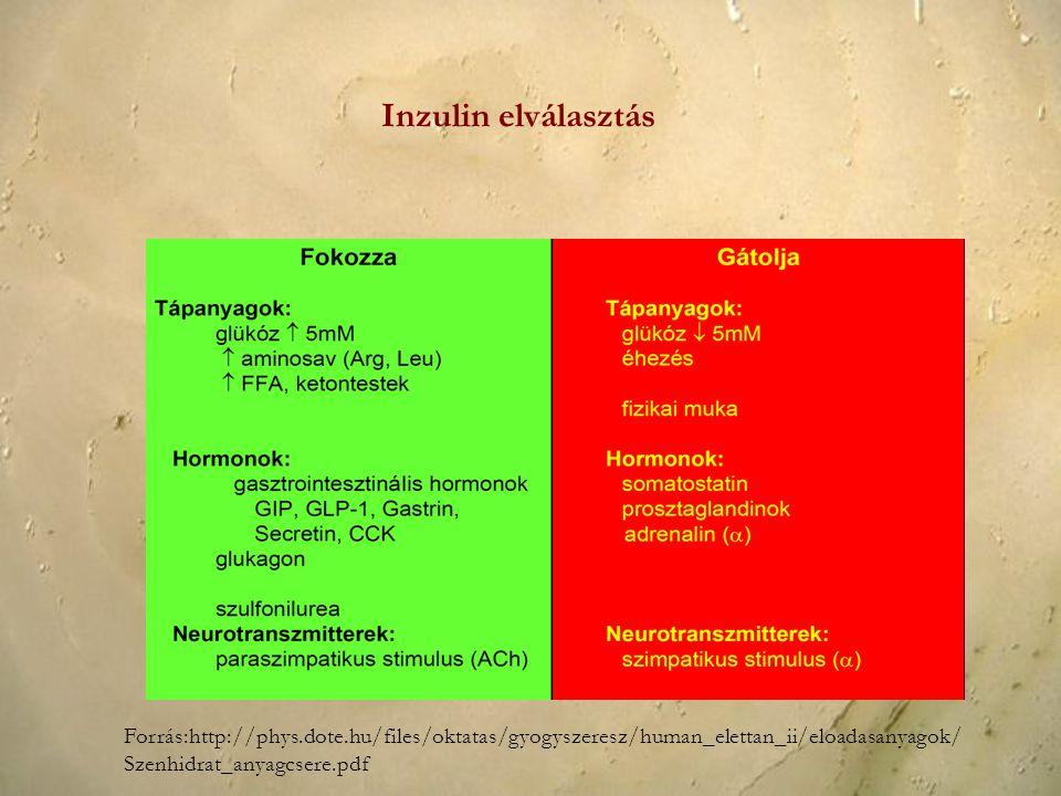 Inzulin elválasztás Forrás:http://phys.dote.hu/files/oktatas/gyogyszeresz/human_elettan_ii/eloadasanyagok/ Szenhidrat_anyagcsere.pdf