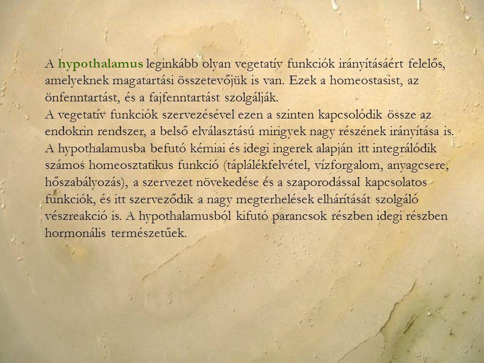 A hypothalamus leginkább olyan vegetatív funkciók irányításáért felelős, amelyeknek magatartási összetevőjük is van. Ezek a homeostasist, az önfenntar