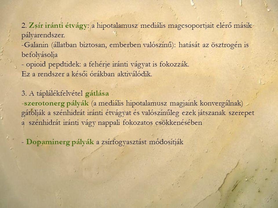 2. Zsír iránti étvágy: a hipotalamusz mediális magcsoportjait elérő másik pályarendszer. -Galanin (állatban biztosan, emberben valószínű): hatását az