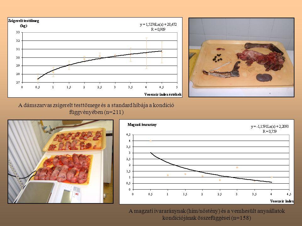 A dámszarvas zsigerelt testtömege és a standard hibája a kondíció függvényében (n=211) A magzati ivararánynak (hím/nőstény) és a vemhesült anyaállatok kondíciójának összefüggései (n=158)