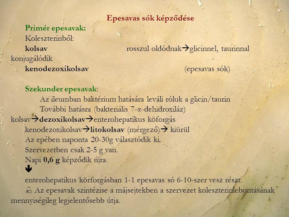 Epesavas sók képződése Primér epesavak: Koleszterinből: kolsavrosszul oldódnak  glicinnel, taurinnal konjugálódik kenodezoxikolsav(epesavas sók) Szek