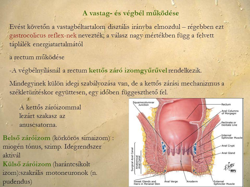 A vastag- és végbél működése Evést követőn a vastagbéltartalom disztális irányba elmozdul – régebben ezt gastrocolicus reflex-nek nevezték; a válasz n