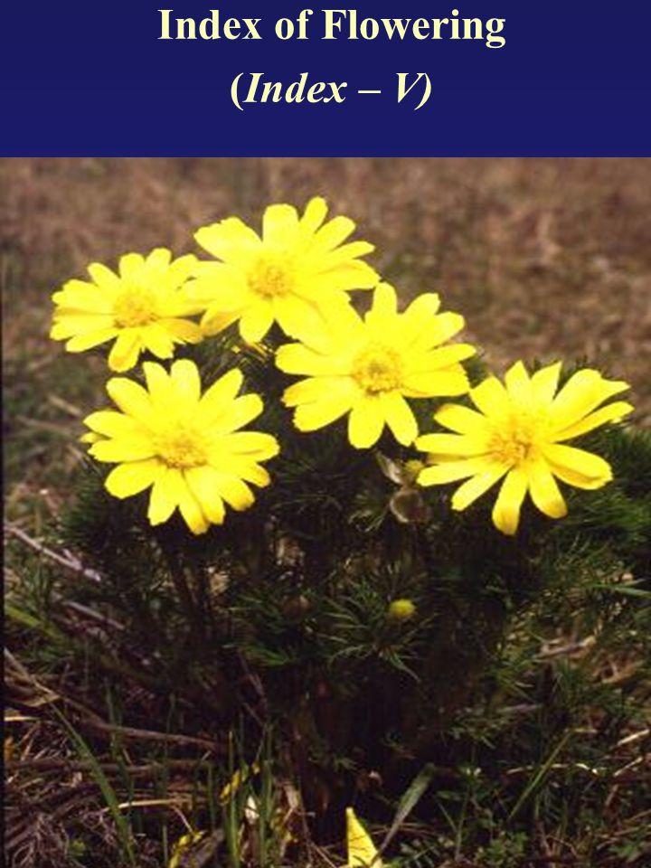 The original paper on the Flowering Index was published by Máthé, Ákos (1977): Az Adonis vernalis L.