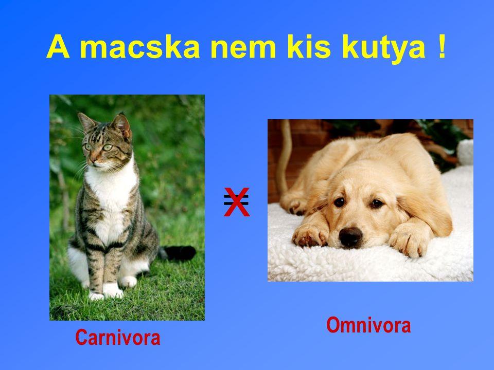 A macska nem kis kutya ! = x Carnivora Omnivora