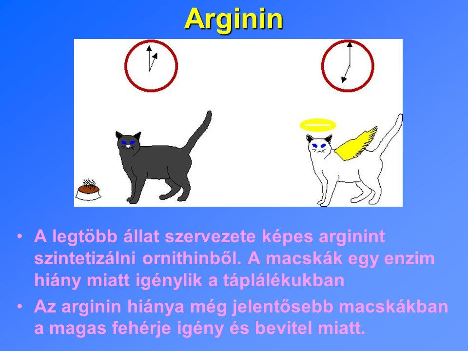 Arginin A legtöbb állat szervezete képes arginint szintetizálni ornithinből.