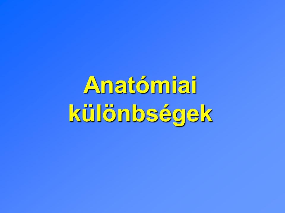 Anatómiai különbségek