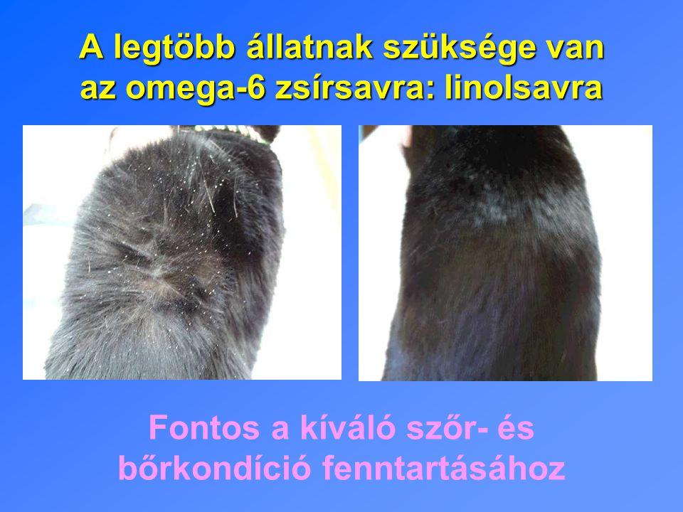 A legtöbb állatnak szüksége van az omega-6 zsírsavra: linolsavra Fontos a kíváló szőr- és bőrkondíció fenntartásához