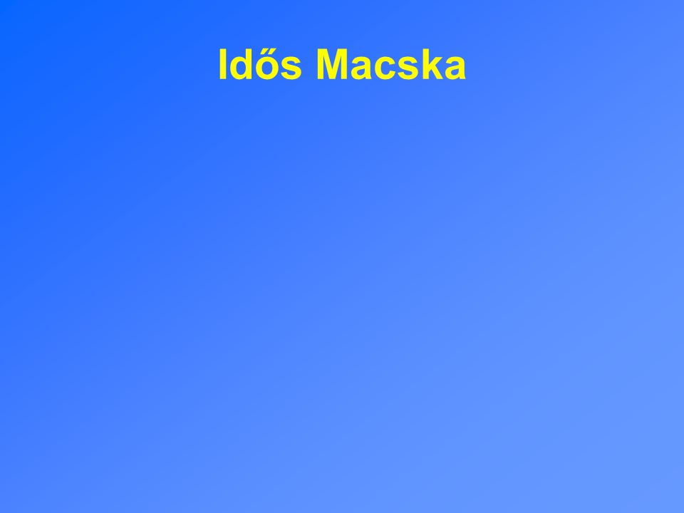 Idős Macska