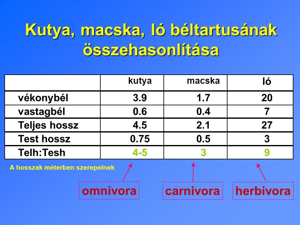 Kutya, macska, ló béltartusának összehasonlítása A hosszak méterben szerepelnek omnivora carnivoraherbivora kutyamacska ló vékonybél3.91.720 vastagbél0.60.47 Teljes hossz4.52.127 Test hossz0.750.53 Telh:Tesh4-539
