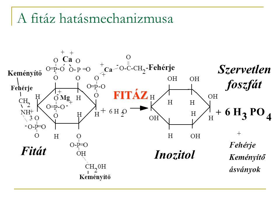 A fitáz hatásmechanizmusa