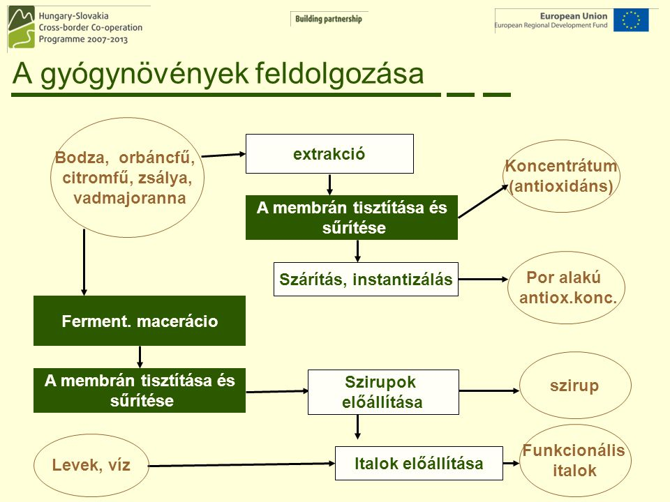 A gyógynövények feldolgozása Bodza, orbáncfű, citromfű, zsálya, vadmajoranna extrakció Funkcionális italok Ferment. macerácio Szárítás, instantizálás
