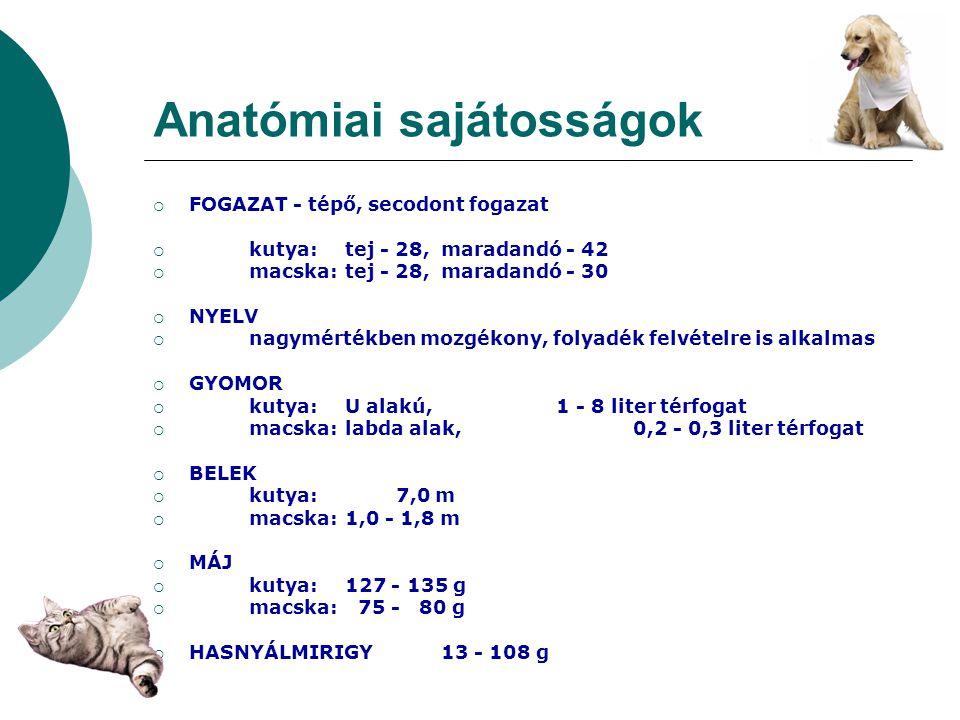 Anatómiai sajátosságok  FOGAZAT - tépő, secodont fogazat  kutya:tej - 28,maradandó - 42  macska:tej - 28,maradandó - 30  NYELV  nagymértékben moz