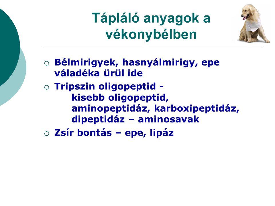 Tápláló anyagok a vékonybélben  Bélmirigyek, hasnyálmirigy, epe váladéka ürül ide  Tripszin oligopeptid - kisebb oligopeptid, aminopeptidáz, karboxi