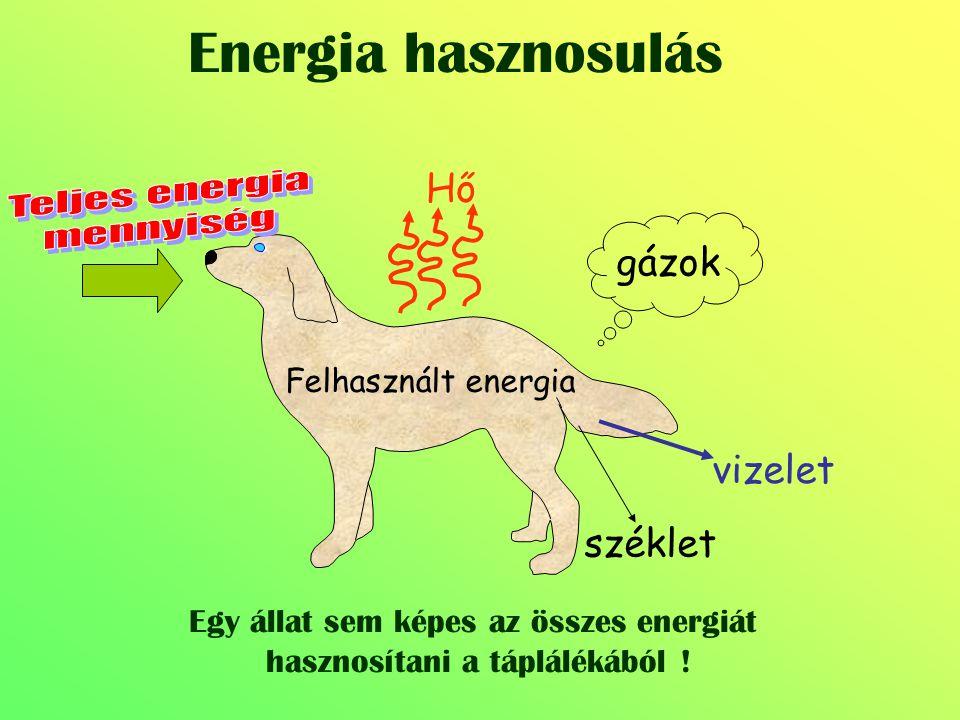 Energia hasznosulás gázok Felhasznált energia Hő vizelet széklet Egy állat sem képes az összes energiát hasznosítani a táplálékából !