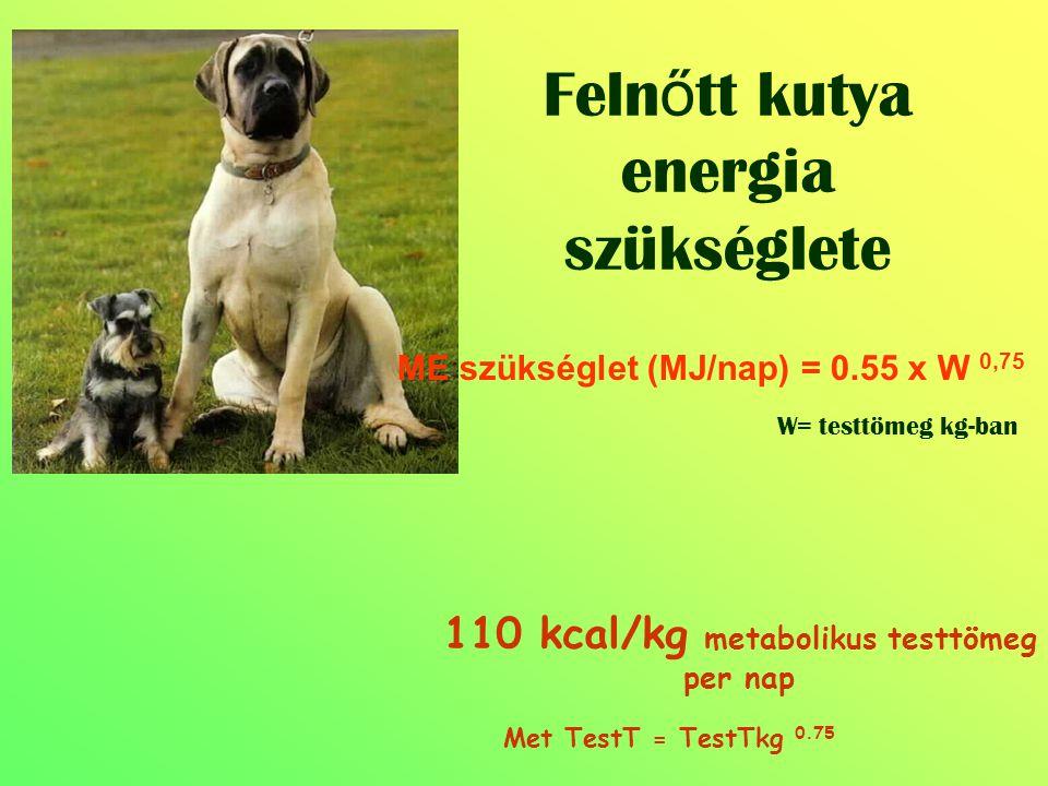 110 kcal/kg metabolikus testtömeg per nap Met TestT = TestTkg 0.75 ME szükséglet (MJ/nap) = 0.55 x W 0,75 W= testtömeg kg-ban