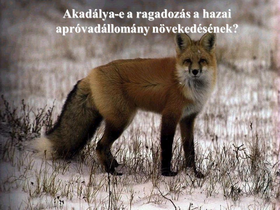 Akadálya-e a ragadozás a hazai apróvadállomány növekedésének?