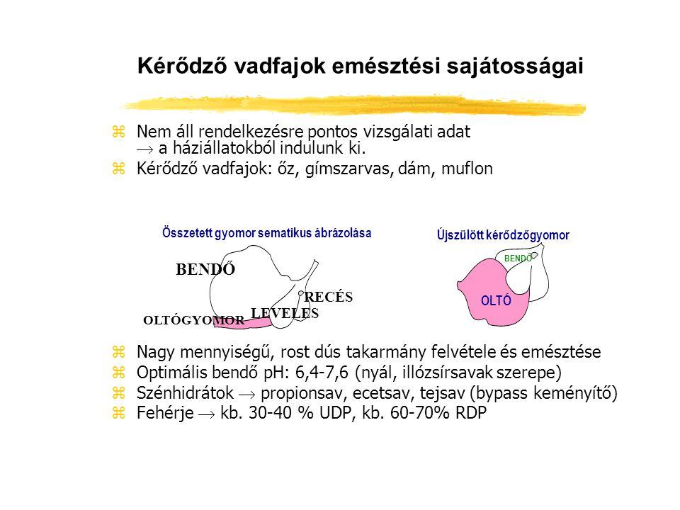 Mikroorganizmusok a kérődző vadfajok bendőjében MegnevezésŐzDámszarvasMuflon Protozoa szám 62×10 5 /ml 1062-1588 ×10 5 /ml 522-938 ×10 5 /ml Baktérium szám 1,5-4,5 ×10 10 /g 0,5-3,1 ×10 10 /g 1,1-2,4 ×10 10 /g