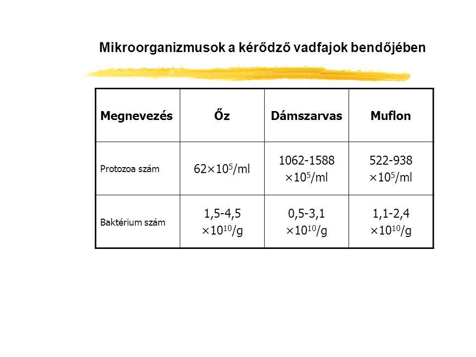Mikroorganizmusok a kérődző vadfajok bendőjében MegnevezésŐzDámszarvasMuflon Protozoa szám 62×10 5 /ml 1062-1588 ×10 5 /ml 522-938 ×10 5 /ml Baktérium
