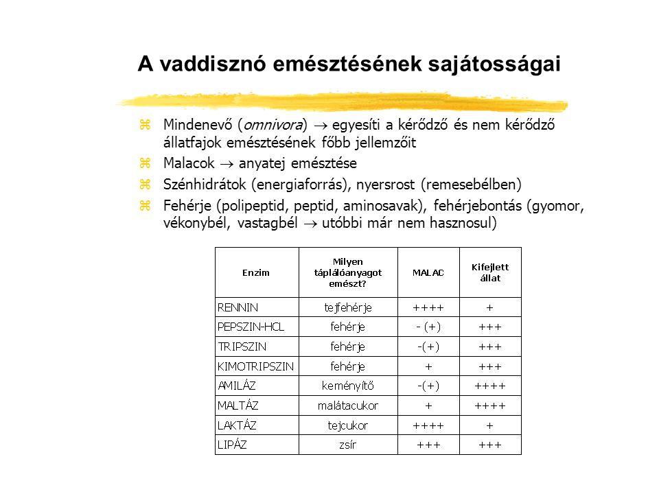 A nyúl emésztési sajátosságai zEgyüregű, összetett gyomor zA vékonybél befogadóképessége viszonylag kicsi zVastagbélben illó zsírsavak (energiaellátás), B-csoportbeli vitaminok termelése zLágybélsár fogyasztása (cékotrófia, ill.