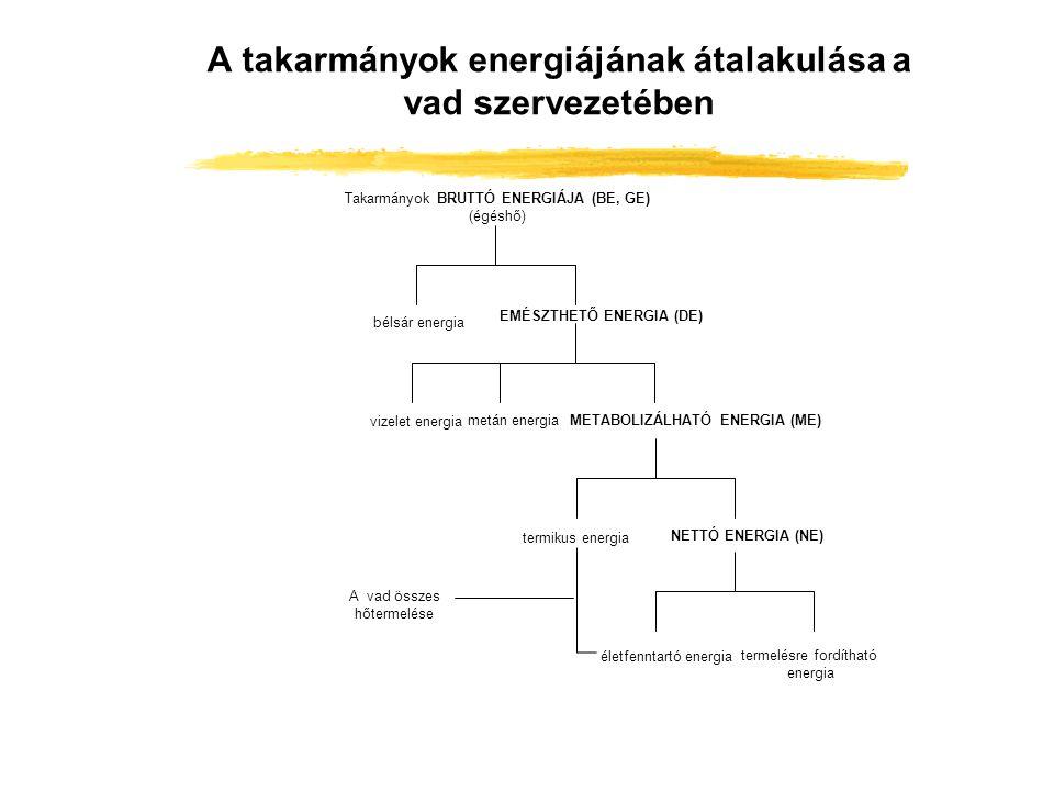 A takarmányok energiájának átalakulása a vad szervezetében Takarmányok BRUTTÓ ENERGIÁJA (BE, GE) (égéshő) bélsár energia EMÉSZTHETŐ ENERGIA (DE) vizel