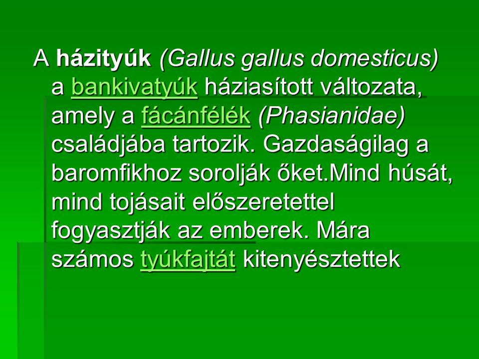 A házityúk (Gallus gallus domesticus) a bankivatyúk háziasított változata, amely a fácánfélék (Phasianidae) családjába tartozik. Gazdaságilag a baromf