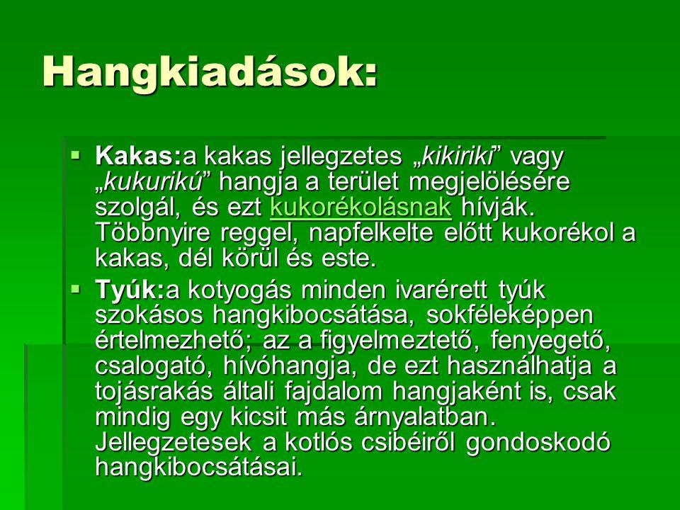 """Hangkiadások:  Kakas:a kakas jellegzetes """"kikiriki"""" vagy """"kukurikú"""" hangja a terület megjelölésére szolgál, és ezt kukorékolásnak hívják. Többnyire r"""