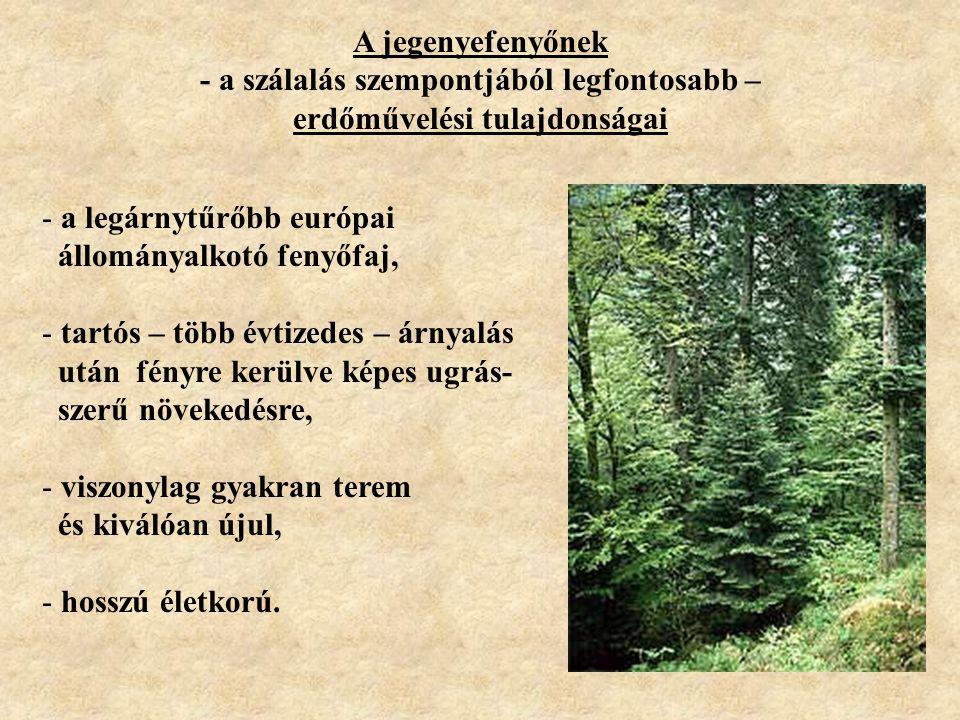 A jegenyefenyőnek - a szálalás szempontjából legfontosabb – erdőművelési tulajdonságai - a legárnytűrőbb európai állományalkotó fenyőfaj, - tartós – t