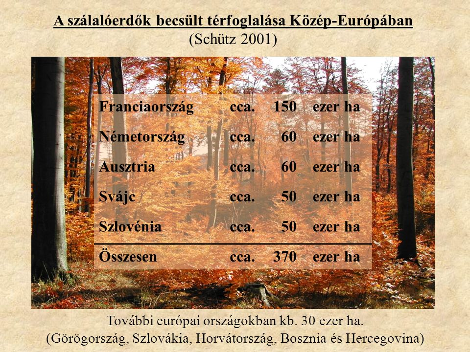 A szálalóerdők becsült térfoglalása Közép-Európában (Schütz 2001) Franciaországcca.150ezer ha Németországcca.60ezer ha Ausztriacca.60ezer ha Svájccca.