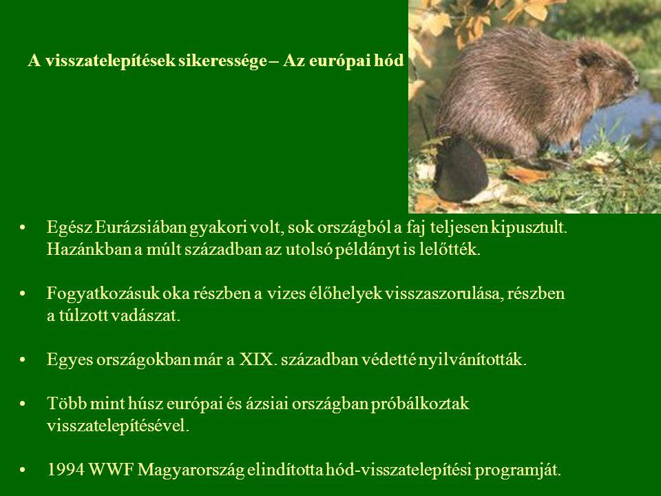 A visszatelepítések sikeressége – Az európai hód Egész Eurázsiában gyakori volt, sok országból a faj teljesen kipusztult. Hazánkban a múlt században a