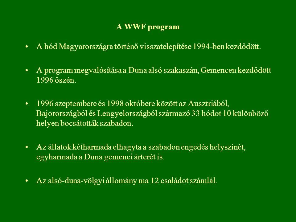 A WWF program A hód Magyarországra történő visszatelepítése 1994-ben kezdődött. A program megvalósítása a Duna alsó szakaszán, Gemencen kezdődött 1996