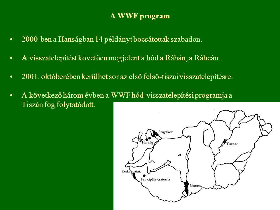 A WWF program 2000-ben a Hanságban 14 példányt bocsátottak szabadon. A visszatelepítést követően megjelent a hód a Rábán, a Rábcán. 2001. októberében