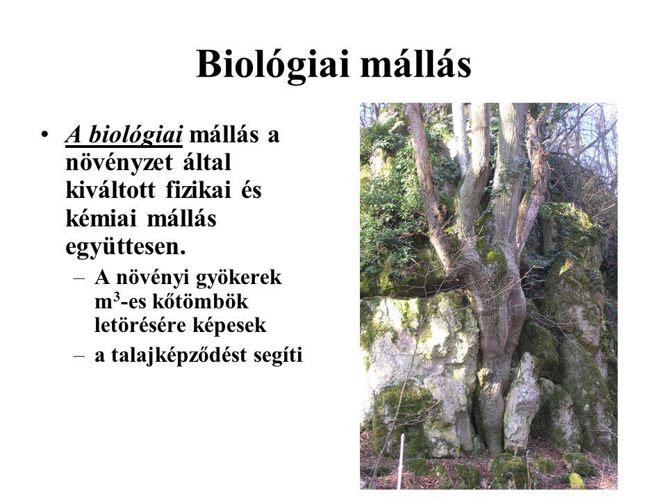 Biológiai mállás A biológiai mállás a növényzet által kiváltott fizikai és kémiai mállás együttesen. –A növényi gyökerek m 3 -es kőtömbök letörésére k