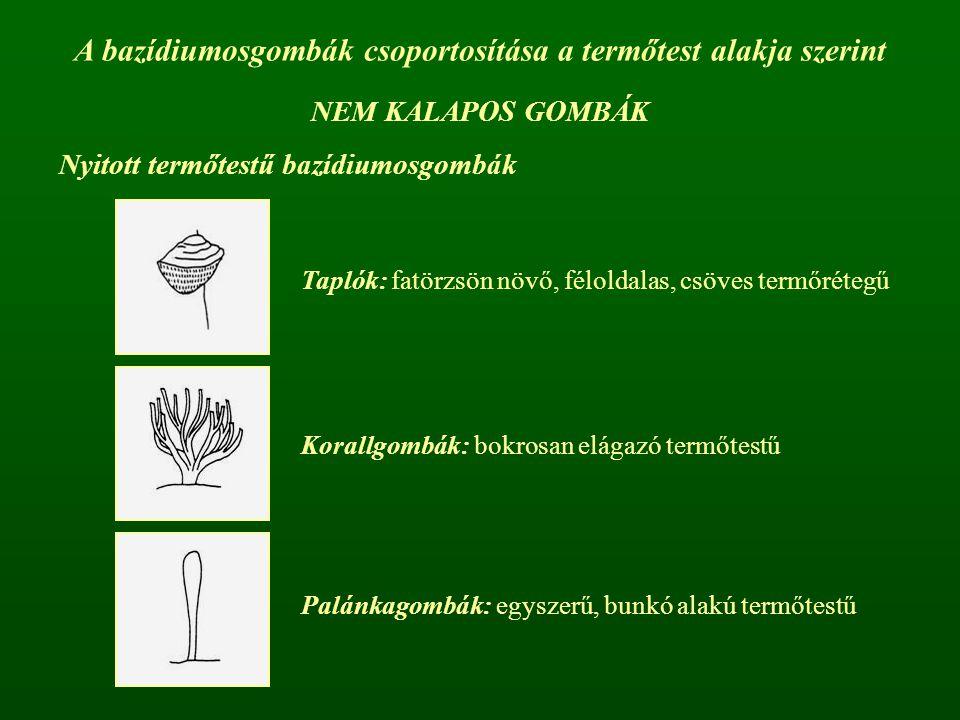 A bazídiumosgombák csoportosítása a termőtest alakja szerint Nyitott termőtestű bazídiumosgombák Taplók: fatörzsön növő, féloldalas, csöves termőréteg