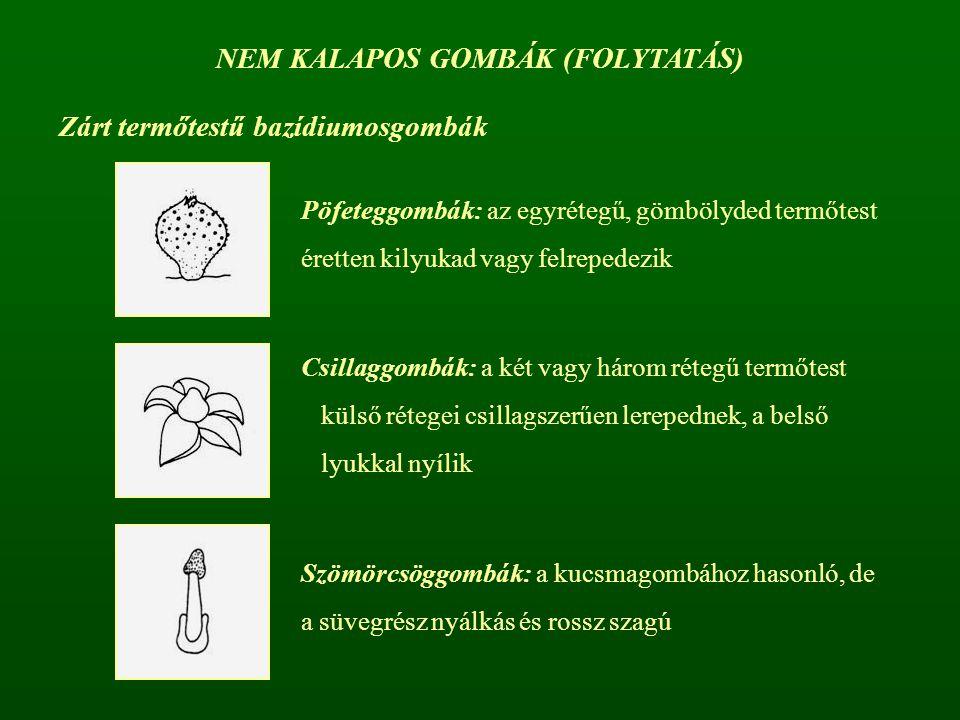 Zárt termőtestű bazídiumosgombák Pöfeteggombák: az egyrétegű, gömbölyded termőtest éretten kilyukad vagy felrepedezik Csillaggombák: a két vagy három