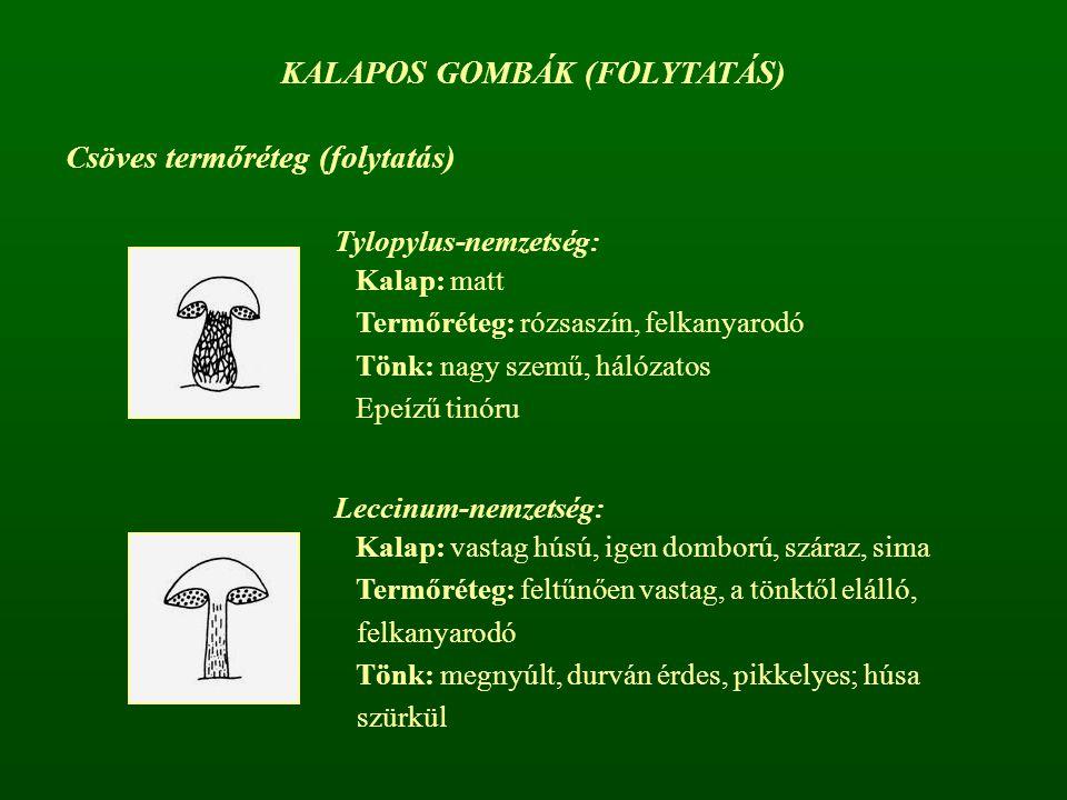 Csöves termőréteg (folytatás) KALAPOS GOMBÁK (FOLYTATÁS) Tylopylus-nemzetség: Kalap: matt Termőréteg: rózsaszín, felkanyarodó Tönk: nagy szemű, hálóza