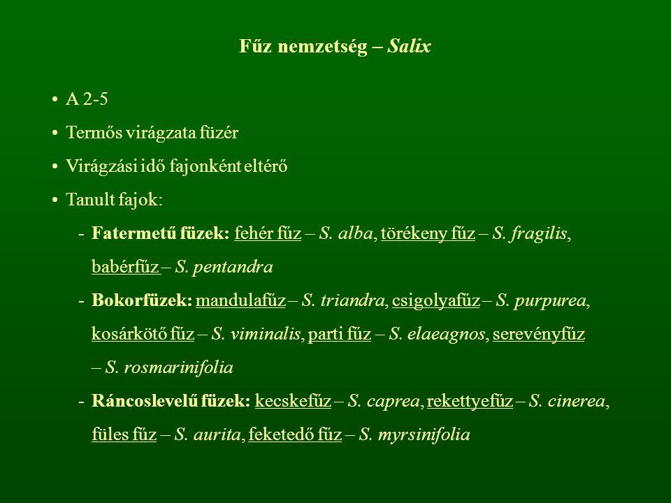 Fűz nemzetség – Salix A 2-5 Termős virágzata füzér Virágzási idő fajonként eltérő Tanult fajok: -Fatermetű füzek: fehér fűz – S. alba, törékeny fűz –