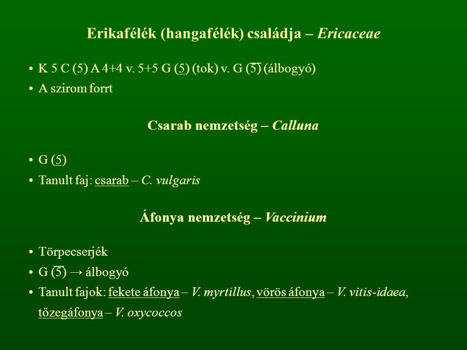Erikafélék (hangafélék) családja – Ericaceae K 5 C (5) A 4+4 v. 5+5 G (5) (tok) v. G (5) (álbogyó) A szirom forrt Csarab nemzetség – Calluna G (5) Tan
