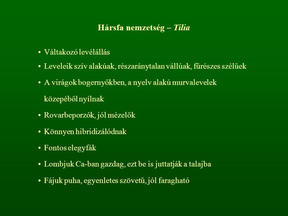 Hársfa nemzetség – Tilia Váltakozó levélállás Leveleik szív alakúak, részaránytalan vállúak, fűrészes szélűek A virágok bogernyőkben, a nyelv alakú mu