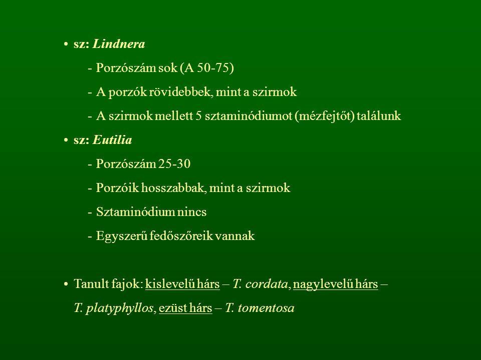 sz: Lindnera -Porzószám sok (A 50-75) -A porzók rövidebbek, mint a szirmok -A szirmok mellett 5 sztaminódiumot (mézfejtőt) találunk sz: Eutilia -Porzó