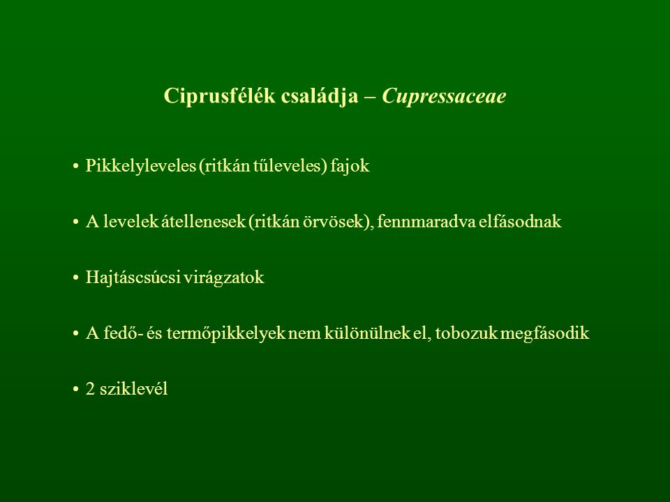 Ciprusfélék családja – Cupressaceae Pikkelyleveles (ritkán tűleveles) fajok A levelek átellenesek (ritkán örvösek), fennmaradva elfásodnak Hajtáscsúcs