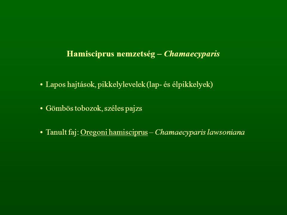 Hamisciprus nemzetség – Chamaecyparis Lapos hajtások, pikkelylevelek (lap- és élpikkelyek) Gömbös tobozok, széles pajzs Tanult faj: Oregoni hamiscipru