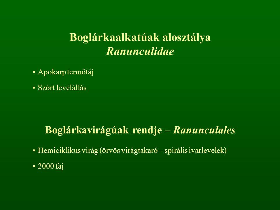Boglárkafélék családja – Ranunculaceae P 3+3 vagy P 2+2 vagy K 5 C 5 A ∞ G ∞ Pálhátlan levelek Apokarp termőtáj Sok porzó, nektáriumokká módosulhatnak Aszmag vagy tüsző termés Iszalag nemzetség – Clematis Fás képviselői liánok Összetett levelek P 2+2 Aszmag terméscsoport Tanult fajok: erdei iszalag – Clematis vitalba, havasi iszalag – Clematis alpina