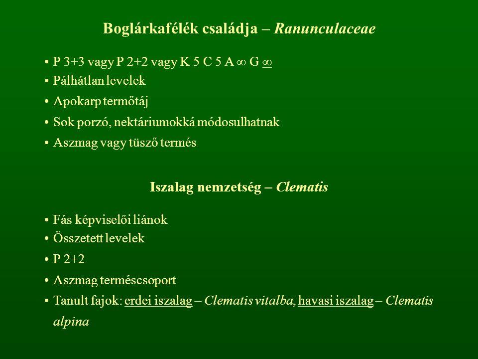 Boglárkafélék családja – Ranunculaceae P 3+3 vagy P 2+2 vagy K 5 C 5 A ∞ G ∞ Pálhátlan levelek Apokarp termőtáj Sok porzó, nektáriumokká módosulhatnak
