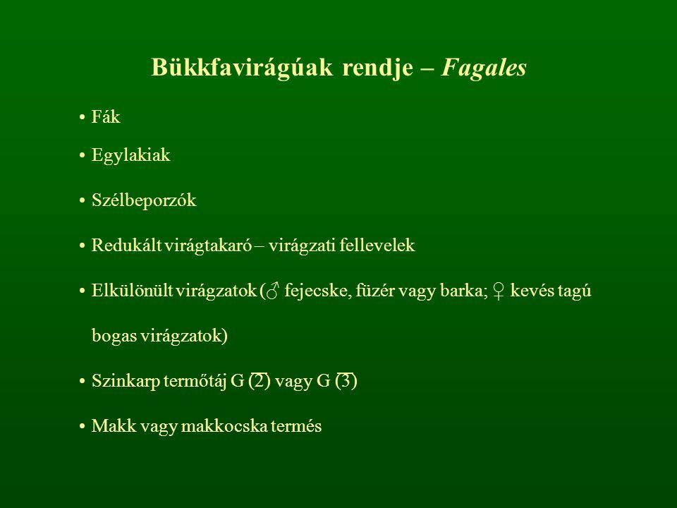 Nyírfélék családja – Betulaceae Szórt levélállás Redukált virágtakaró, apró virágok Barkapikkely (murva- és előlevelekből összeforrt) ♂ P 2+2 A 2+2 vagy A (2) ♀ P (2+2) vagy P 0 G (2)