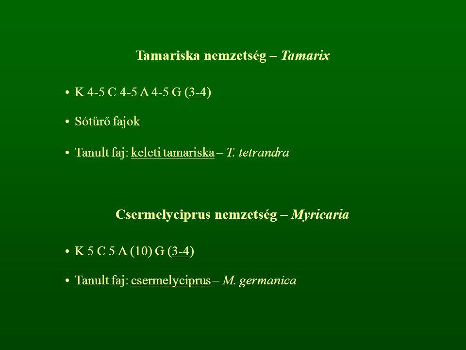 Tamariska nemzetség – Tamarix K 4-5 C 4-5 A 4-5 G (3-4) Sótűrő fajok Tanult faj: keleti tamariska – T. tetrandra Csermelyciprus nemzetség – Myricaria