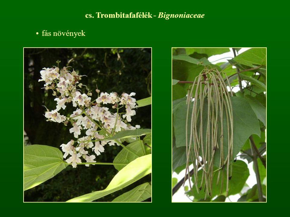 cs. Trombitafafélék - Bignoniaceae fás növények