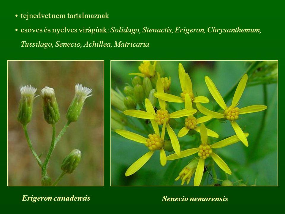 tejnedvet nem tartalmaznak csöves és nyelves virágúak: Solidago, Stenactis, Erigeron, Chrysanthemum, Tussilago, Senecio, Achillea, Matricaria Erigeron canadensis Senecio nemorensis