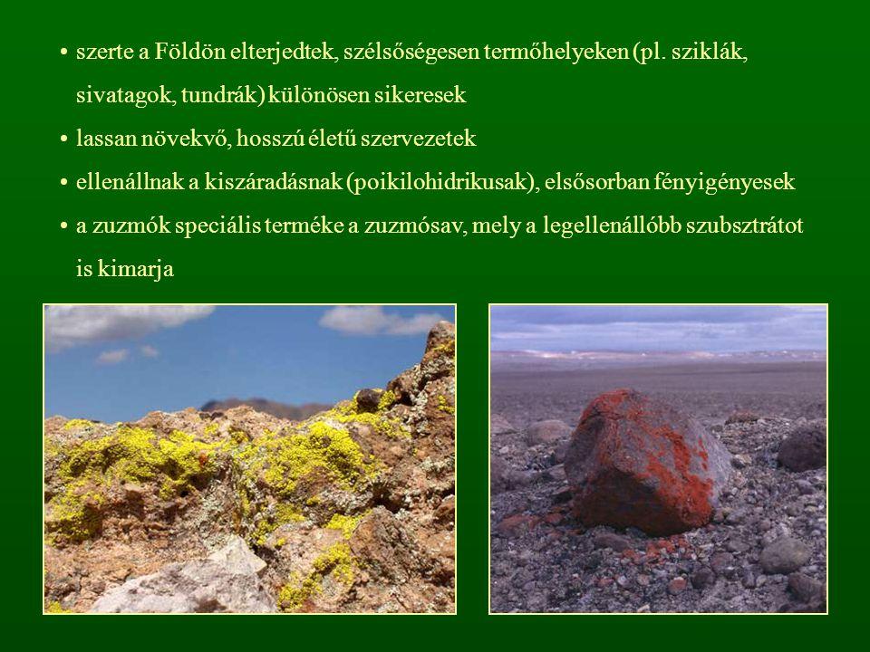 szerte a Földön elterjedtek, szélsőségesen termőhelyeken (pl. sziklák, sivatagok, tundrák) különösen sikeresek lassan növekvő, hosszú életű szervezete