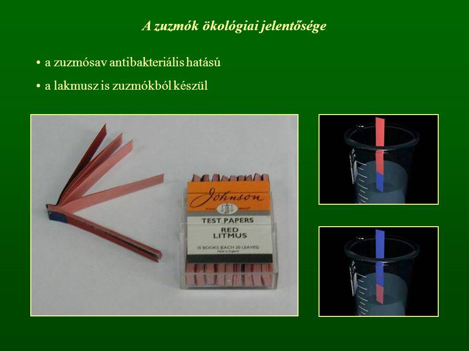 A zuzmók ökológiai jelentősége a zuzmósav antibakteriális hatású a lakmusz is zuzmókból készül