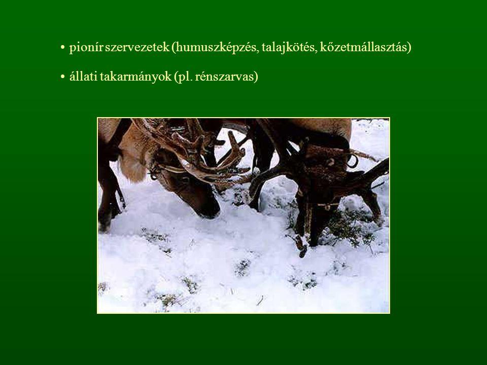 pionír szervezetek (humuszképzés, talajkötés, kőzetmállasztás) állati takarmányok (pl. rénszarvas)